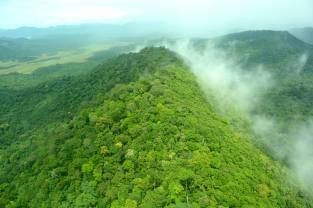 guyana-rainforest