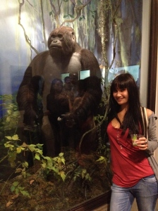 The mountain gorilla (Gorilla beringei beringei).