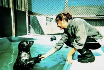 Positive reinforcement training with Pacific harbor seal, Sprouts at the Long Marine Laboratory, UCSC 2002.