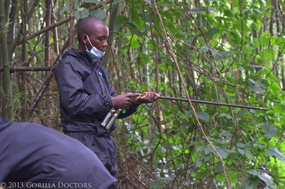 Dr. Noel prepares dart for Kampanga.